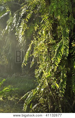 Fern Light Day Outdoor Country