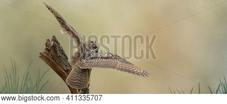 Panorama Of A Eurasian Eagle Owl. Sit On A Stump. Spread The Wings For Takeoff. Bird Looks Back, The
