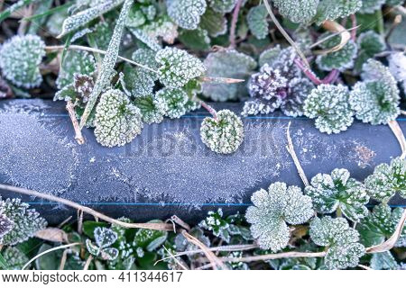 Selective Focus. First Frost On A Frozen Black Plastic Water Pipe, Late Autumn Close-up. Beautiful A