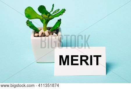 On A Light Blue Background - A Potted Plant And A White Card With The Inscription Merit
