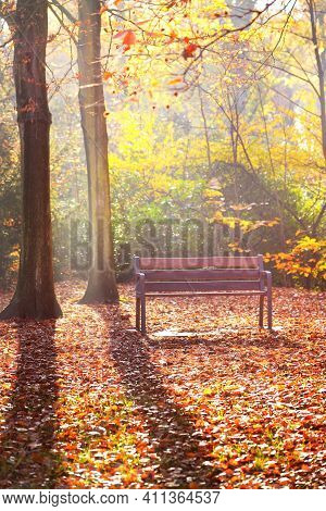 A Wooden Bench Under The Red, Orange And Yellow Beech Trees In The Nachtegalen Park. Sunlight Glowin