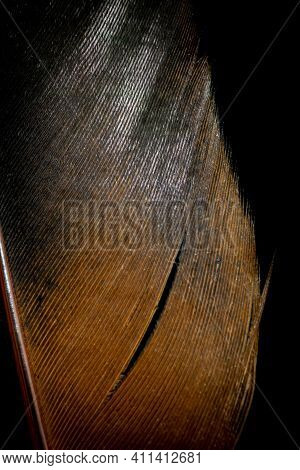 Brown And Black Rooster Feathers On Black Background
