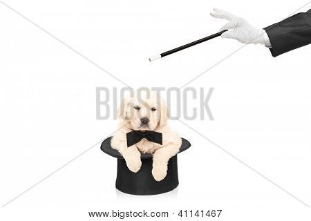 Small dog in top hat and hand with a magic wand isolated on white background