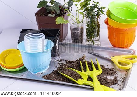 Seedlings And Home Garden Tools. Home Gardening And Planting Supplies With Seedlings And Flower Pots