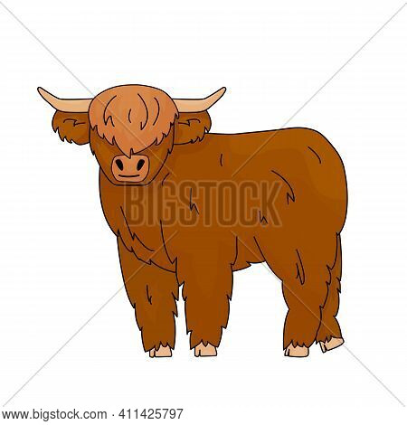 Cute Cartoon Vector Outline Doodle Illustration Of Small Bull Scottish Highland Cow Kid. Isolated An