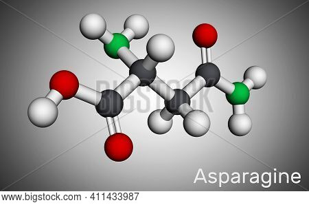 Asparagine, L-asparagine, Asn Molecule. It Is Non-essential Amino Acid, Used In The Biosynthesis Of