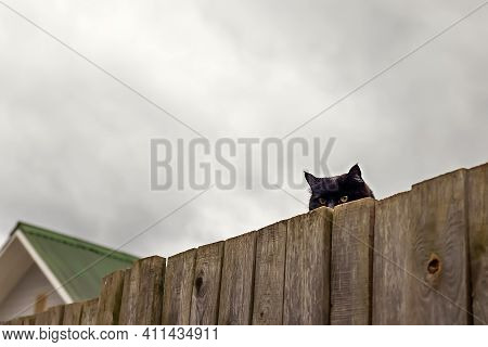 Close-up And Selective Focus Of Black Cat That Sticks Out From Behind Wooden Fence Against Cloudy, R