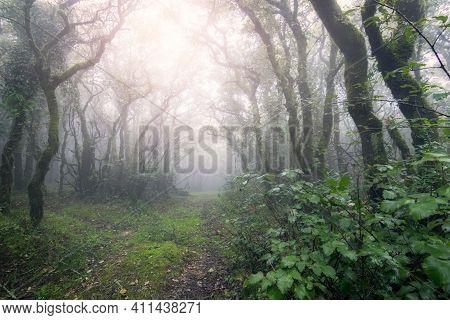 Foggy Forest With Sun Rays In Tarifa, Cadiz, Spain.