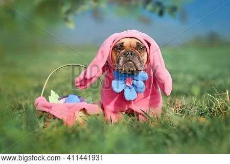 Funny French Bulldog Dog Wearing Pink Easter Bunny Costumes With Arms And Big Flower Next To Easter