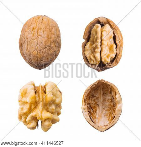Walnut Whole, Opened, Half, Kernel And Shell On A White Background. The View From The Top.