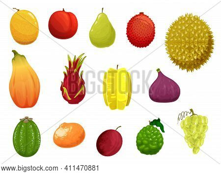 Fruits Vector Icons Melon, Peach, Pear And Lychee, Durian Or Papaya With Lime, Plum Or Dragon Fruit.