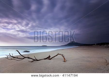 Wood lost in the sand of a beautiful beach