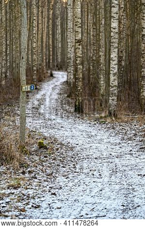Mtb Trail Through Birch Forest A Cold Winter Day