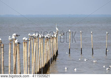 Many Seagulls Are Perched On A Bamboo Pole In The Sea.