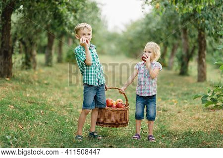 Family Picking Apples On Farm In Autumn. Children Playing In Tree Orchard. Cute Little Girl And Boy