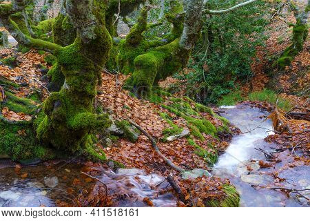 Beech Landscape In Autumn With Creek Going Down The Mountain And Long Exposure Photography. Somosier