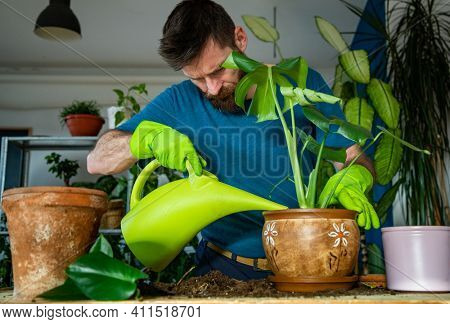 man planting houseplants indoors home gardening