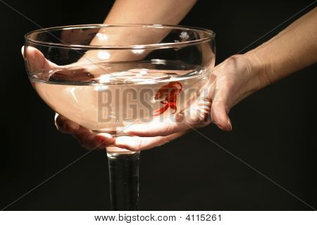 Hands Holding Fish In Giant Glass