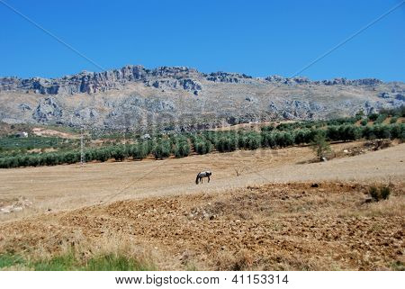 Agricultural land, Andalusia, Spain.