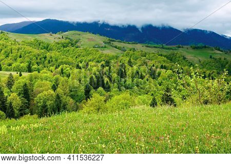 Mountainous Countryside Scenery In Spring. Trees And Grass On Hills Rolling Through The Green Valley