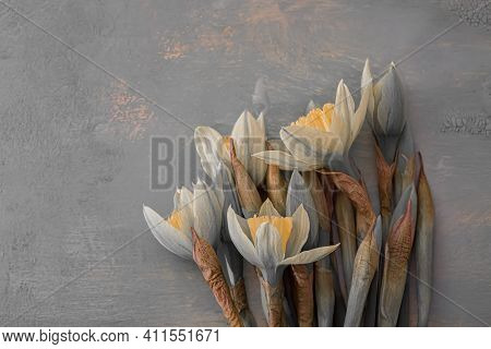 Art Photography Of Daffodils Flowers. Shallow Depth Of Field. Gray Flowers Daffodils On A Wooden Tab