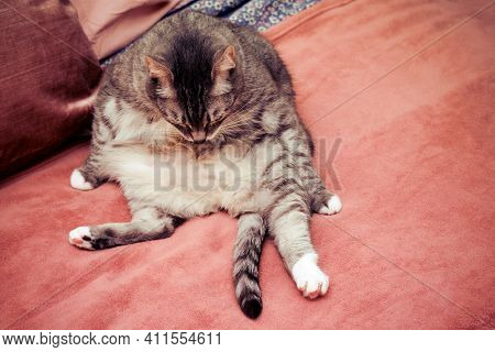 Strange Sad Cat Funny Sitting Like A Man On The Couch, Copy Space For Text