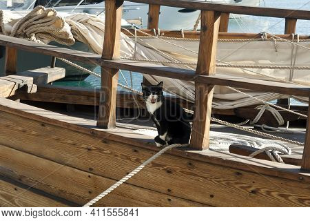 Meowing Tuxedo Cat Sitting On Wooden Sailboat In Sea Harbor