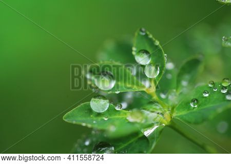 Earth Day. Ecological . Green Leaves With Water Drops On Blurred Bright Green Background.beautiful N