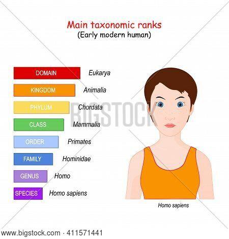 Main Taxonomic Ranks. The Hierarchy Of Biological Classification's Major Taxonomic Ranks: Domain, Ki