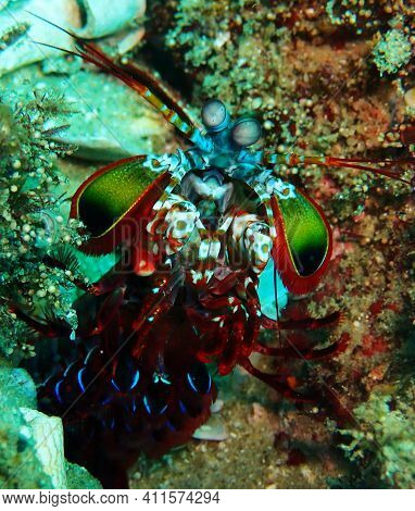 Brightly Coloured Crustacean On The Reefs On Tofo, Mozambique