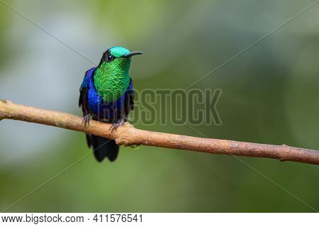 Iridescent Hummingbird Perched On A Small Branch With A Downy Circular Background