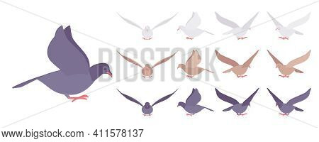Pigeons And Doves Set, Domestic Or Street Bird In Flight. Wildlife Study, Ornithology And Birdwatchi