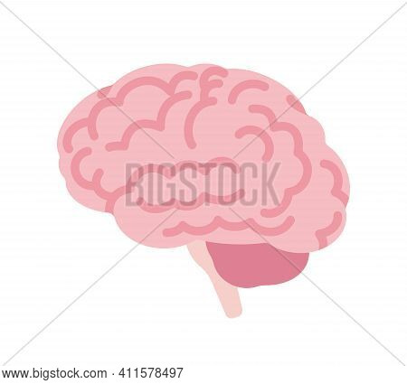 Human Brain Anatomical Study, Medical, Scientific Classroom Model Side View. Nervous System Central