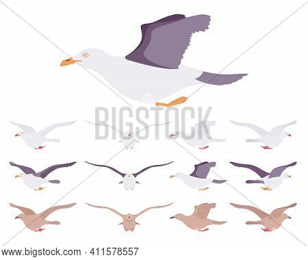 Gulls, Seagulls Wildlife Seabirds In Flight Motion. Wildlife Study, Ornithology And Birdwatching Con
