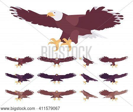Eagle Set, Large Powerful Bird With Massive Wings In Flight. Wildlife Study, Ornithology And Birdwat