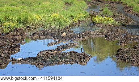 A Boggy Muddy Vehicle Track Through Swamp Land