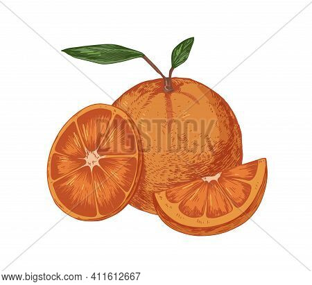 Fresh Whole Orange With Slice And Segment Of Fruit. Ripe Juicy Citrus With Leaves. Hand-drawn Colore
