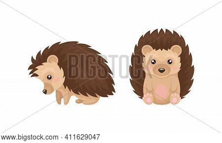 Cute Hedgehog In Various Poses As Prickly Forest Animal Vector Set