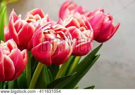Close-up Of A Bouquet Of Fresh Pink Tulips In The Vase. Colourful Flowers And Herbs. Womens And Moth
