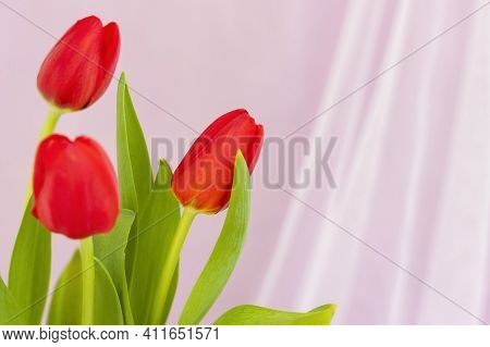 Red Tulips Close-up On A Fabric Pink Background. Spring Mood. Spring Greeting Card For Mother's Day