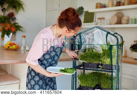 Organic Food Growing, Home Kitchen Gardening, Microgreen Sprouts Greenhouse, Healthy Nutrition