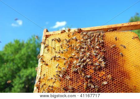 plenty of bees on honeycomb frame in the summertime poster