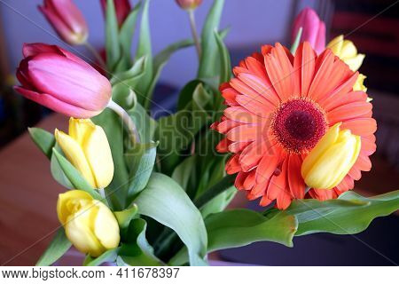 Still-life With Beautiful Colorful Bouquet With Many Red And Yellow Tulips And Single Orange Gerbera