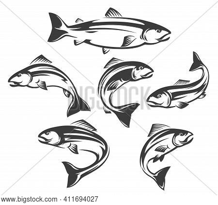 Salmon Or Trout Fish Isolated Icons Of Vector Fishing Sport And Seafood Design. Ocean Or Sea Water A