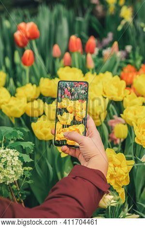 Hand Of Girl Holding Smartphone And Taking Photo Of Bright Colorful Tulips. Modern Technology And Sp