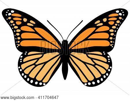 Monarch Butterfly. Hand Drawn Vector Illustration. Orange Bug.