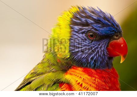 Very colorful bird close up