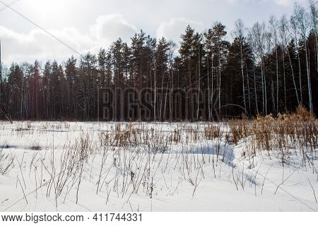 Winter Panorama Landscape With Forest, Trees Covered Snow And Sunrise. Winterly Morning Of A New Day