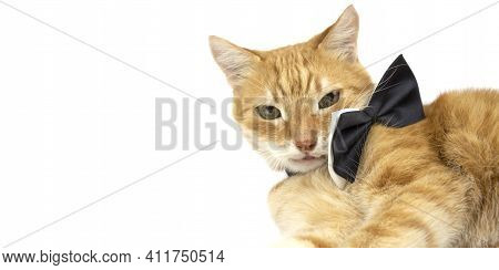 Ginger Cat Looks Into The Camera. Pictures Of Cats, Cat Eyes, Cute Cat, Drawings Of Cats. Banner. Is