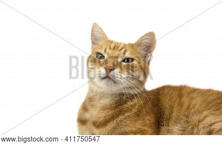 Ginger Cat Looks Into The Camera. Pictures Of Cats, Cat Eyes, Cute Cat, Drawings Of Cats, Drawings O